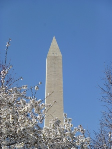 Cherry Blossom / Washington Monument