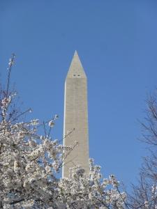 Cherry Blossom / Washington Monument