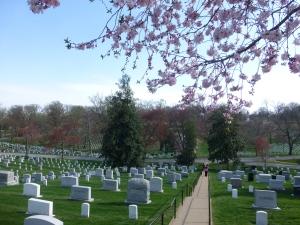 Cherry Blossom / Arlington Cemetery