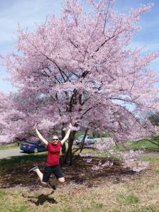 Cherry Blossom / National Arboretum
