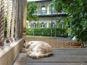 Hemingway's Six-Toed Cat
